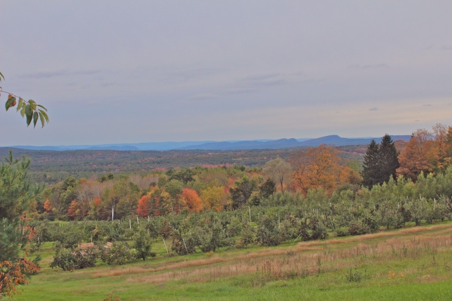 The view from the University of Massachusetts Cold Spring Orchard, Belchertown, Massachusetts (Bar Lois Weeks photo, from 'Apples of New England')